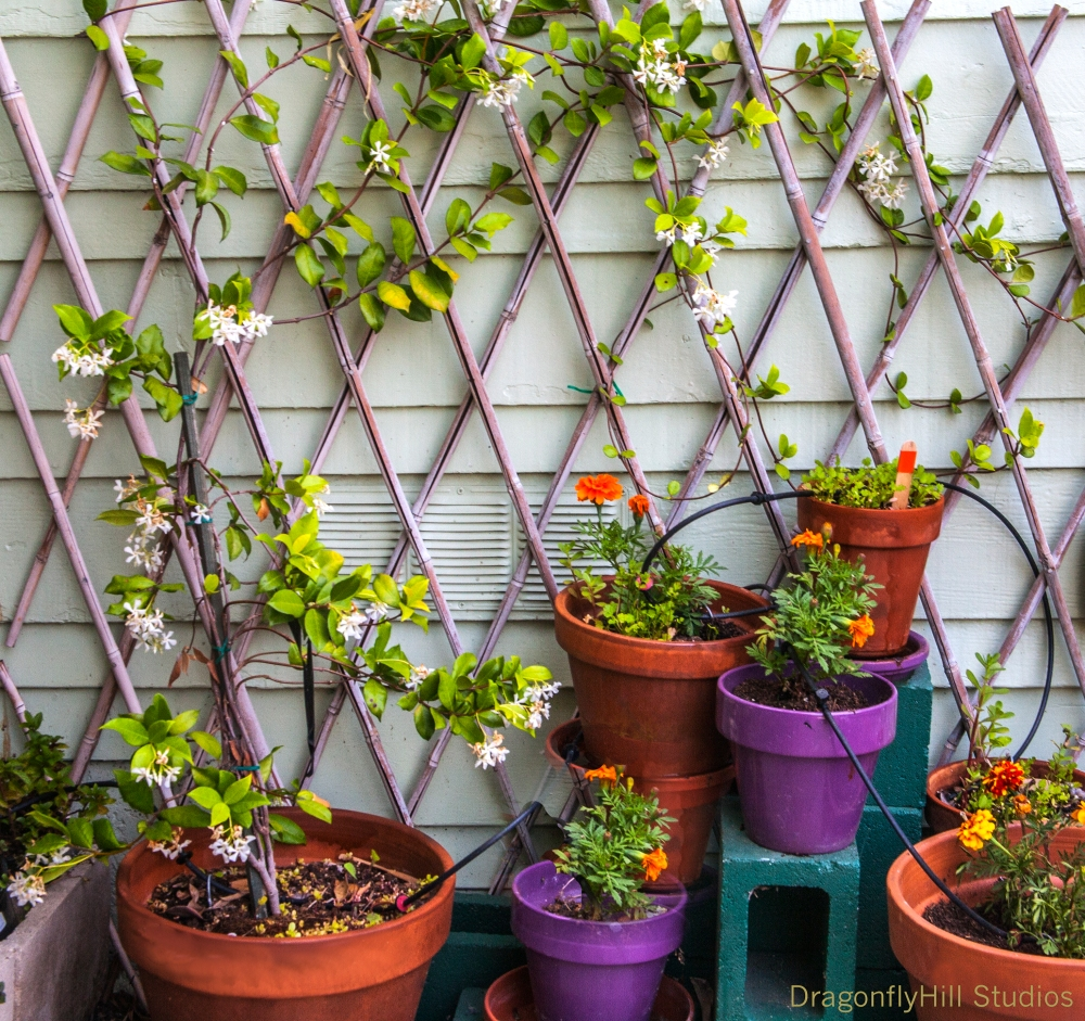 Image of container plants