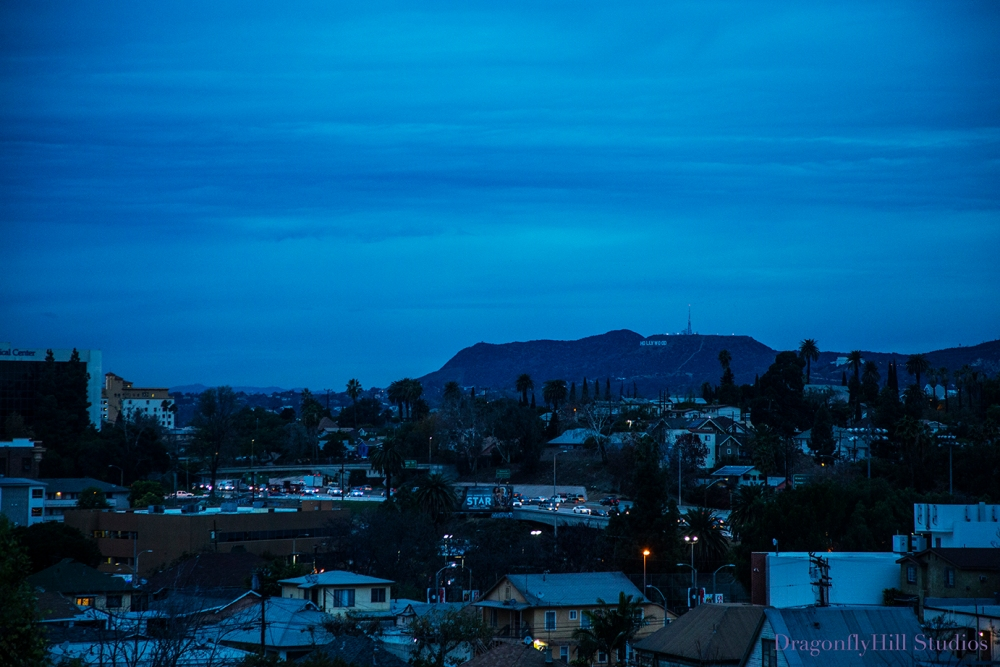 View from DragonflyHiill Urban Farm at dawn, with view of the Hollywood Hills & the Hollywood Sign.
