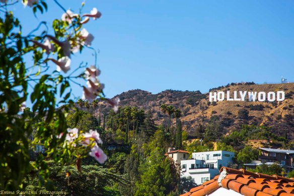 Image of the Hollywood Sign from Beachwood Canyon. Hollywood sign with houses, hillsides, plants in the foreground and a very blue sky. Prints available at reduced prices! All proceeds to go The WE Empowerment Center, a 501 c 3 charitable trust https://emmarosenthal.smugmug.com/Emmas-Store/LA-Paradise-Chimera/